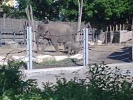 Közös látogatás az Állatkertbe, 2014